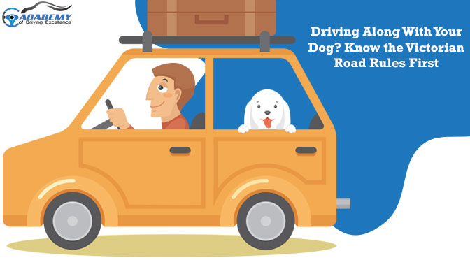Driving Along With Your Dog? Know the Victorian Road Rules First